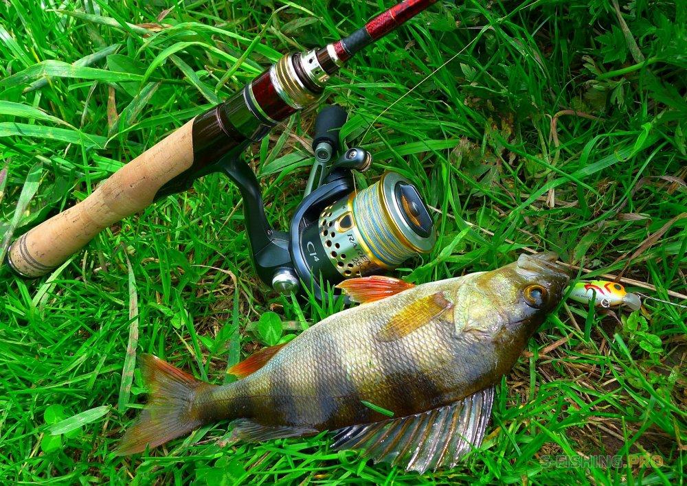 моя рабочая снасть для рыбалки