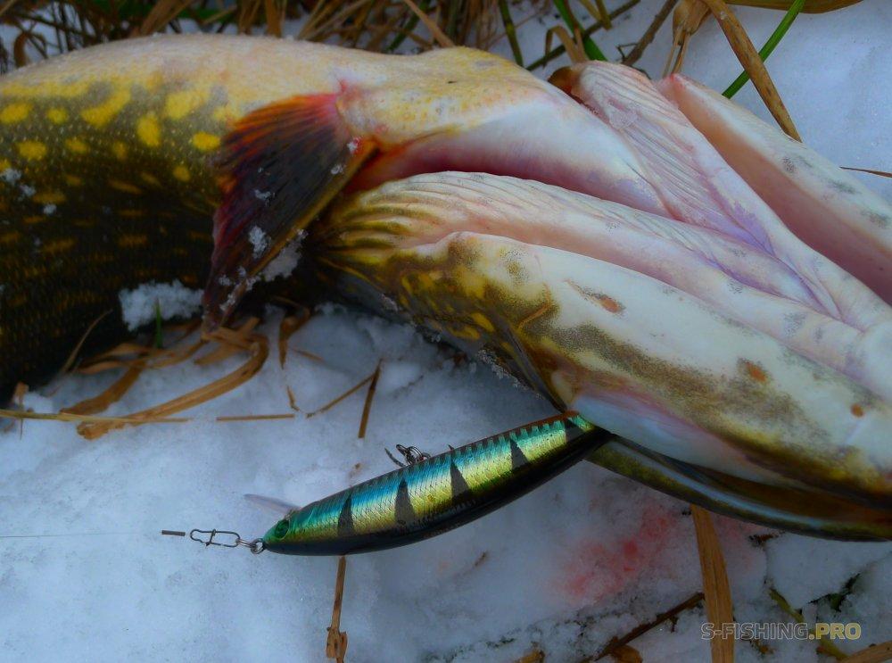 Обзоры: Флюорокарбоновый поводок для ловли щуки.