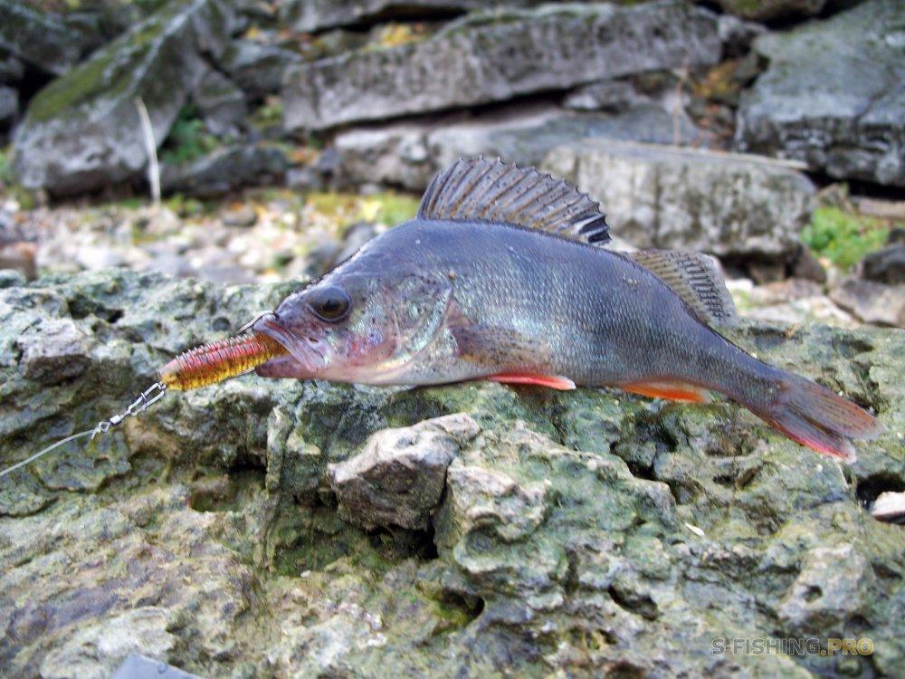 Обзоры: Осенняя ловля окуня виброхвостом SEEKER от LURE MAX