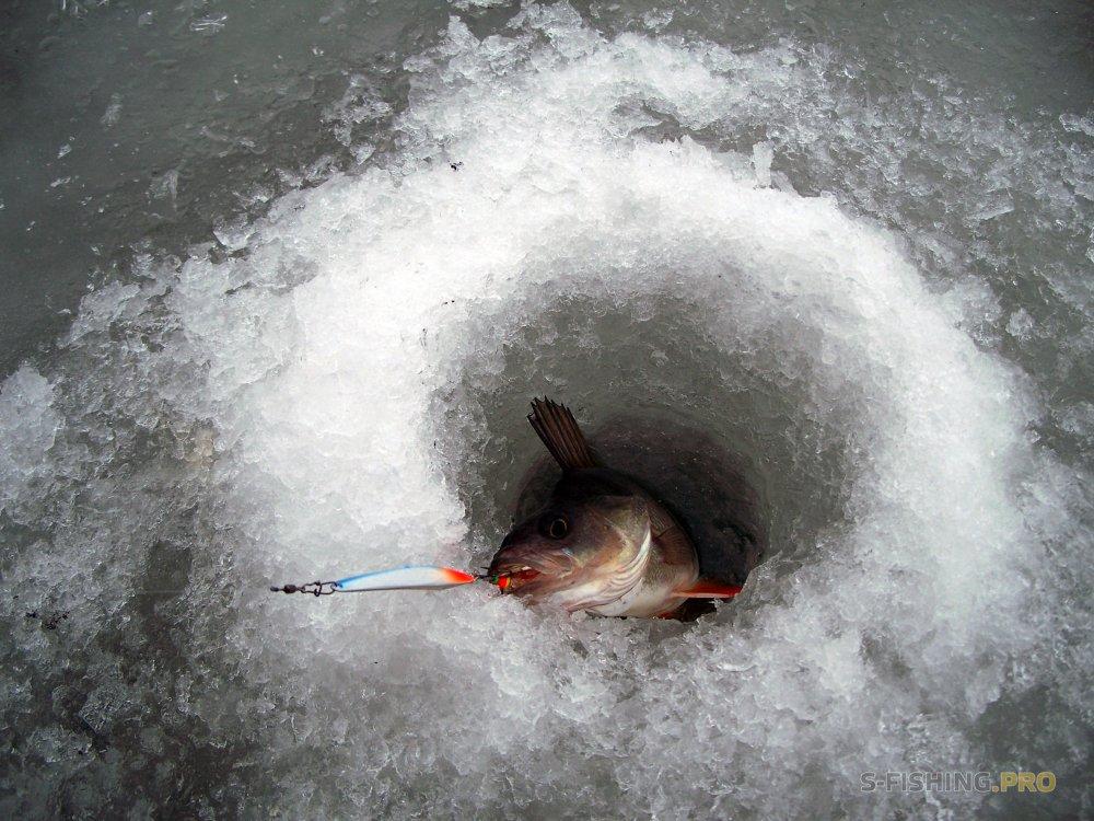 Отчеты с водоемов: ECO номная PRO двинутая рыбалка блесной ECO PRO SPY 70