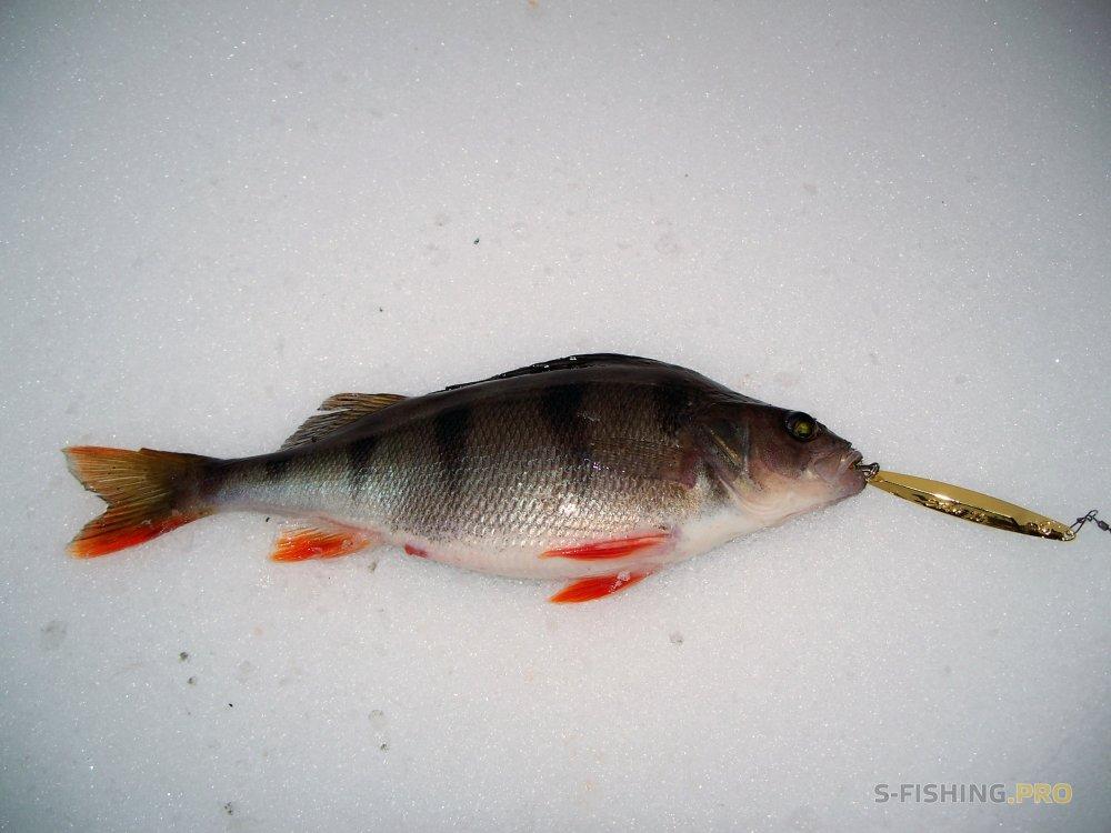 Отчеты с водоемов: Новогодняя ECO номная PRO гулка на рыбалку с блесной ECOPRO ERA .