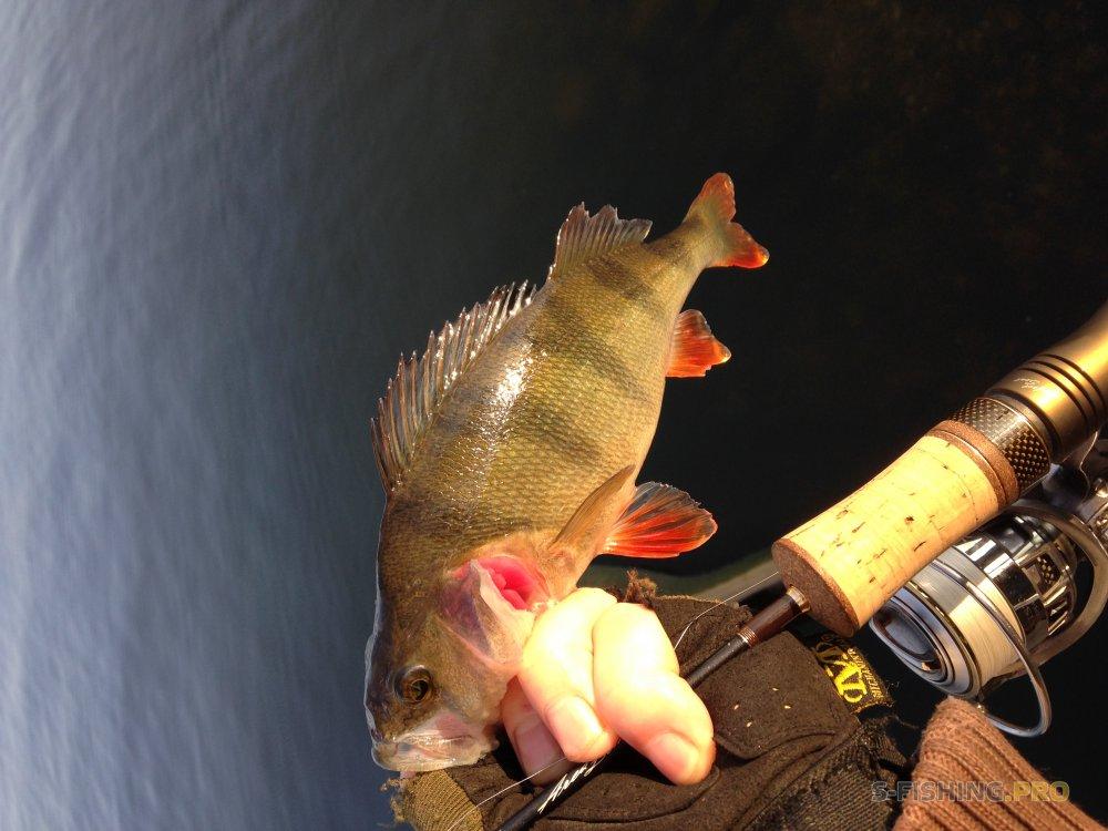LureMax рыбалка одной приманкой или попытка испытать новое.