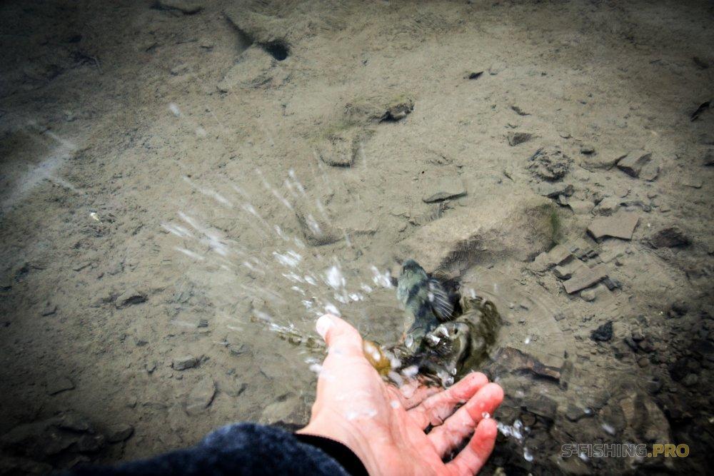 ТМ Crazy Fish: Осень в Крыму