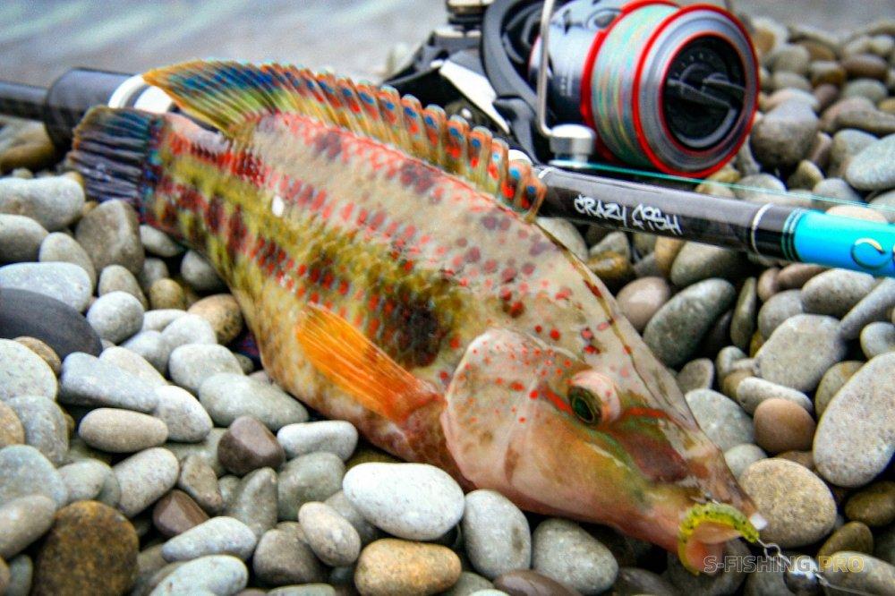 ТМ Crazy Fish: Рыбалка поздней осенью на Черном Море
