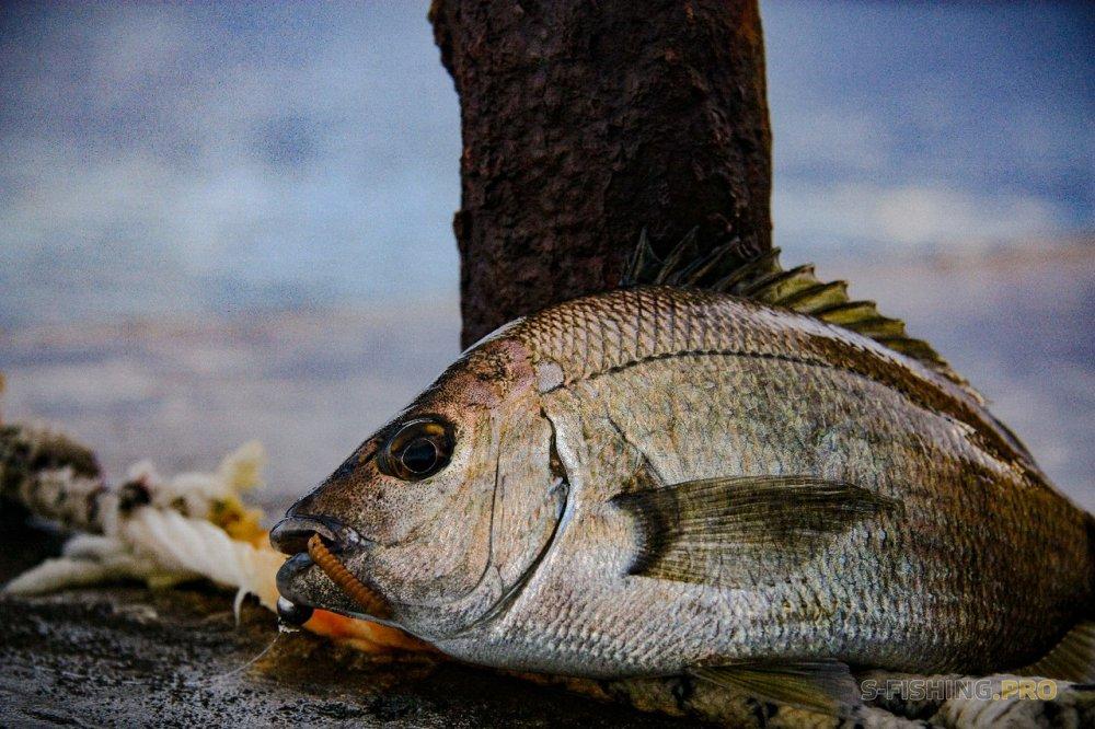 ТМ Crazy Fish: Дождливые ВЫХОДНЫЕ