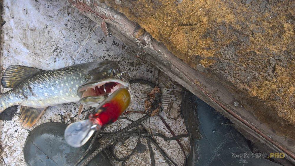 Отчеты с водоемов: Охота за зубастой
