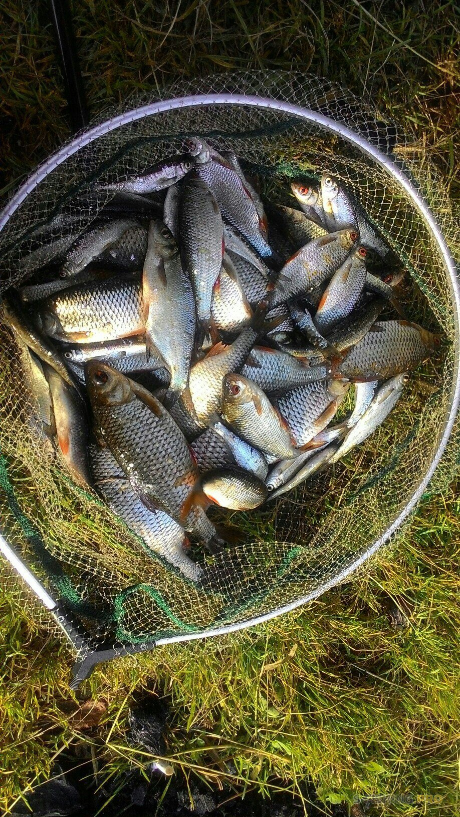 Рыбалка прошла под названием накормить рыжего или рыбалка Greedy Fish
