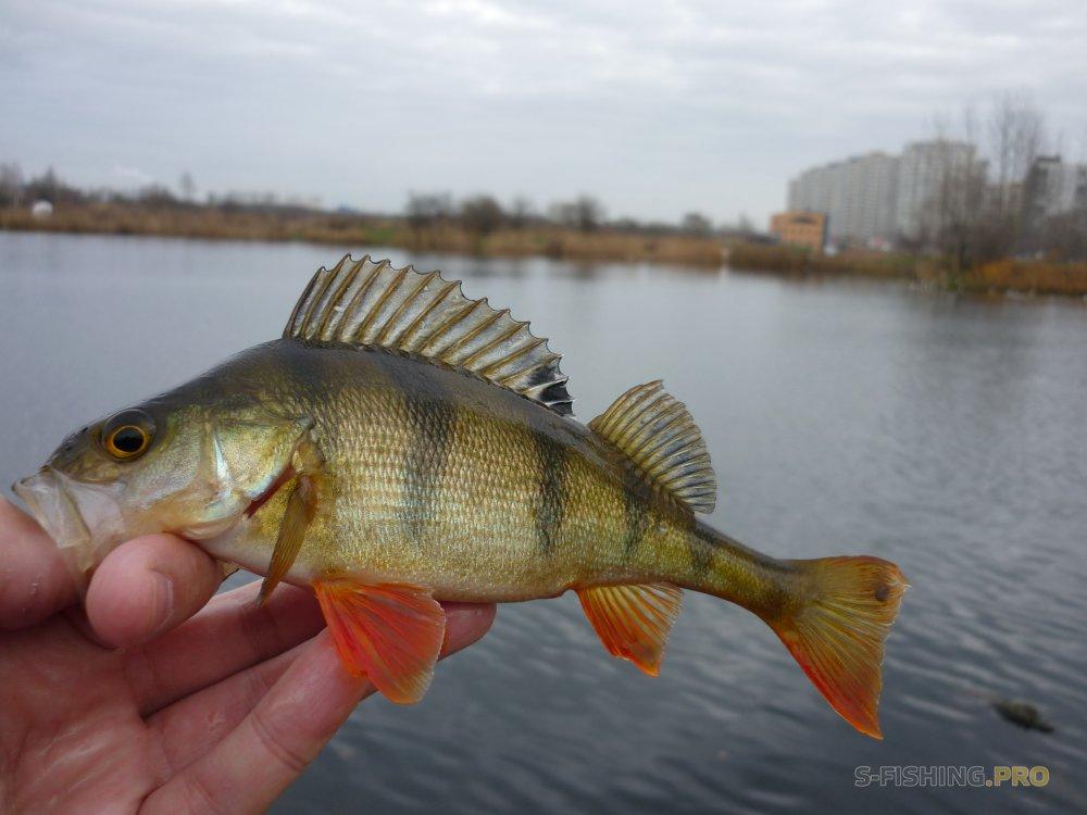 Team of Fishing Actions: Рыбалка после трудовой недели