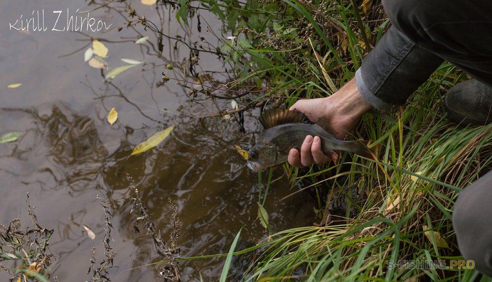 Отчеты с водоемов: Поиск городской щуки продолжается