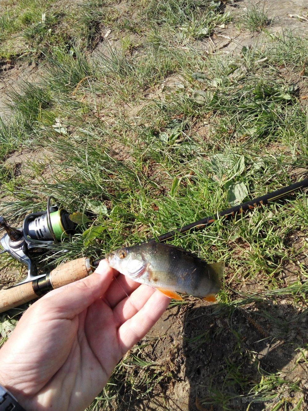 Обзоры: Рыбалка с Kosadaka Invince