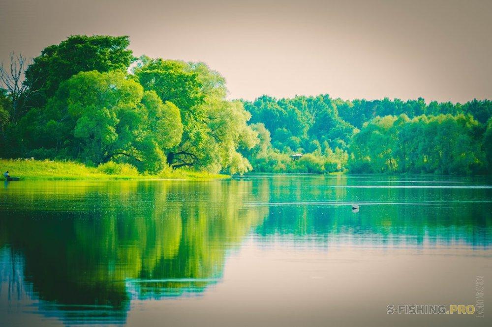wild fishing по быстрому)