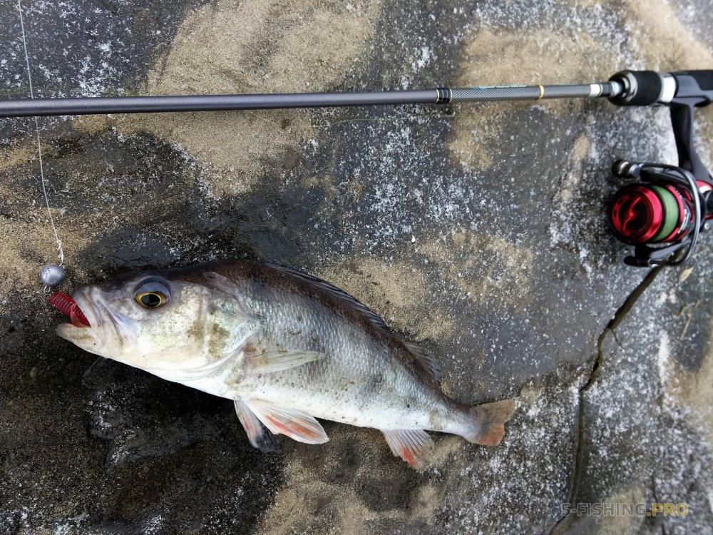 рыбалка на каме на спиннинг с берега