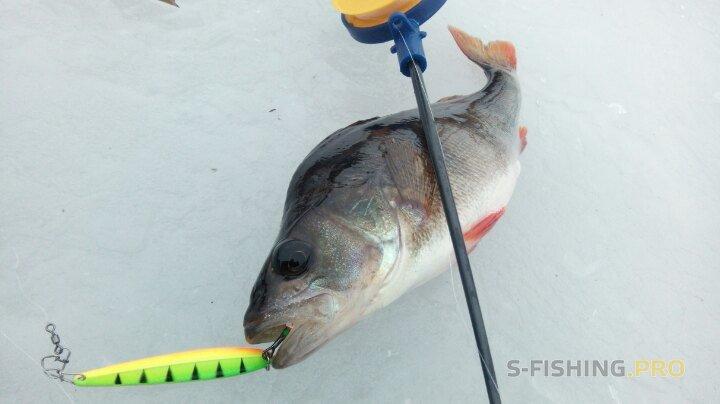 Отчеты с водоемов: Заключительная рыбалка в 2017 году и открытие зимнего сезона твёрдой воды Источник: http://s-fishing.pro/