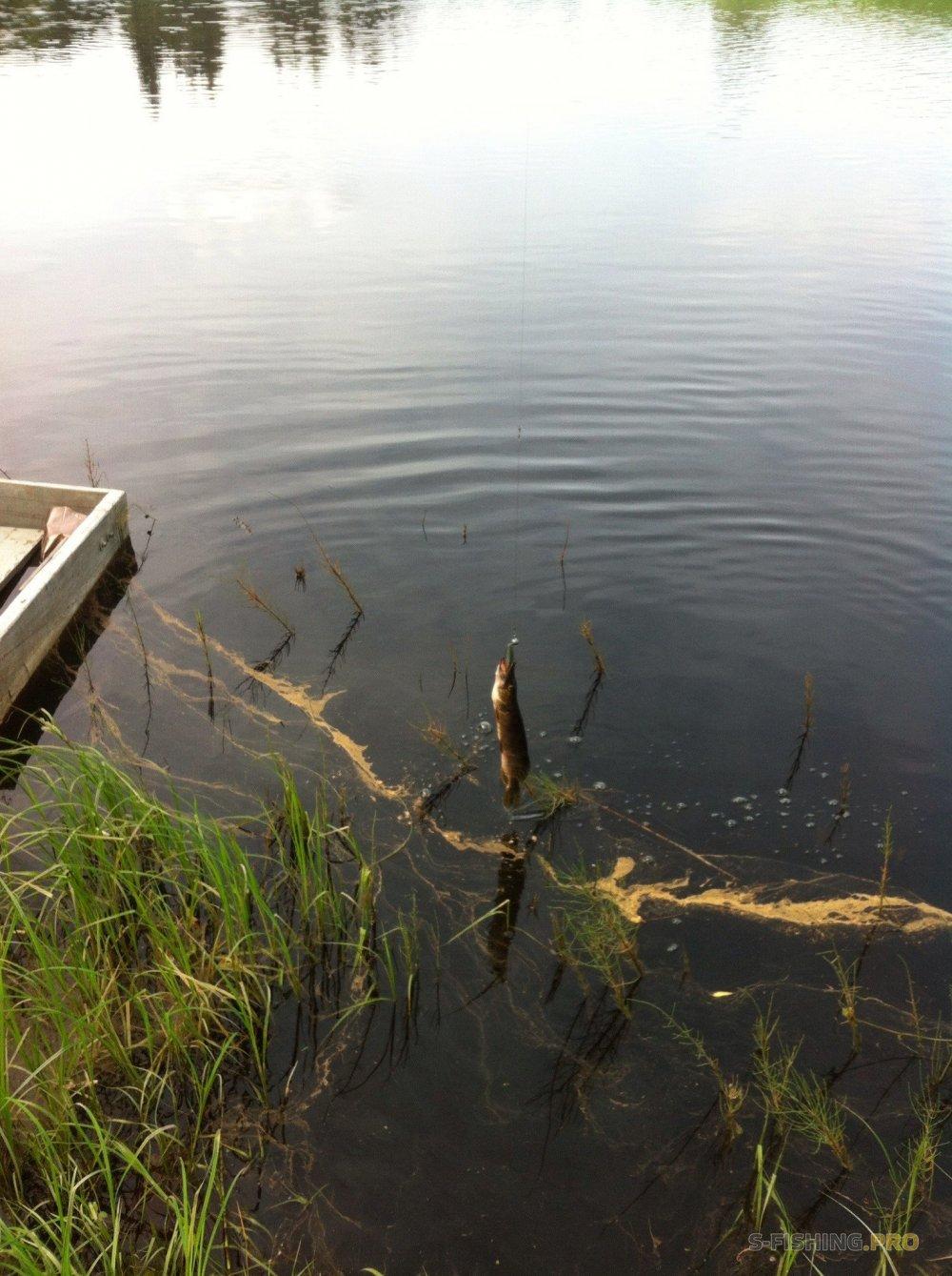 Мягкие приманки Lure Max на лесных водоемах нашего бескрайнего Севера
