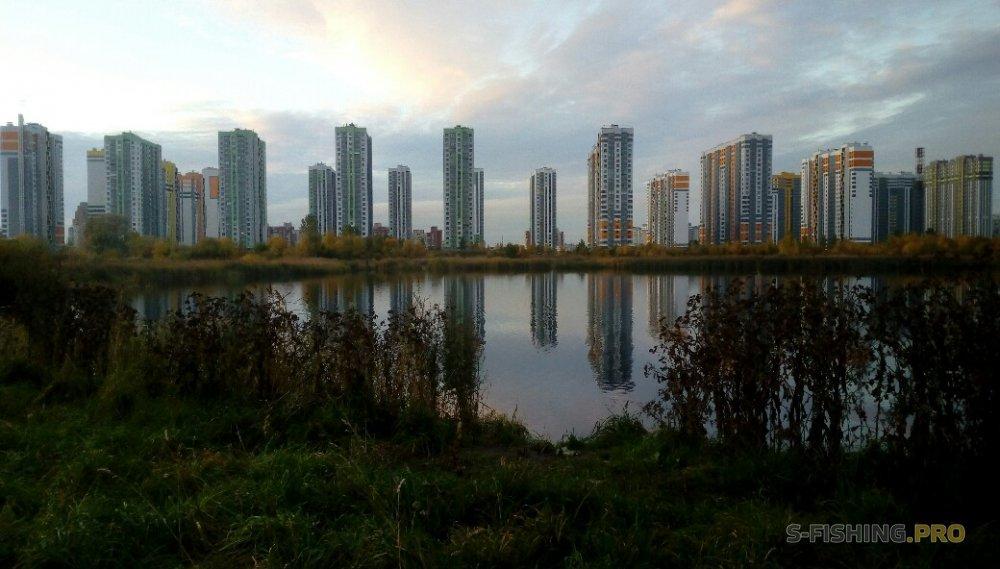 Отчеты с водоемов: LureMax и купчинский окунь