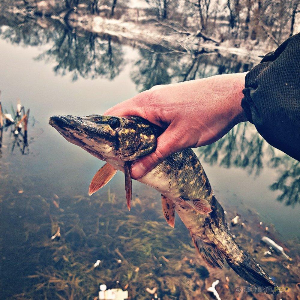 Отчеты с водоемов: спиннинг за 10ть дней до нового года в Орловской области!