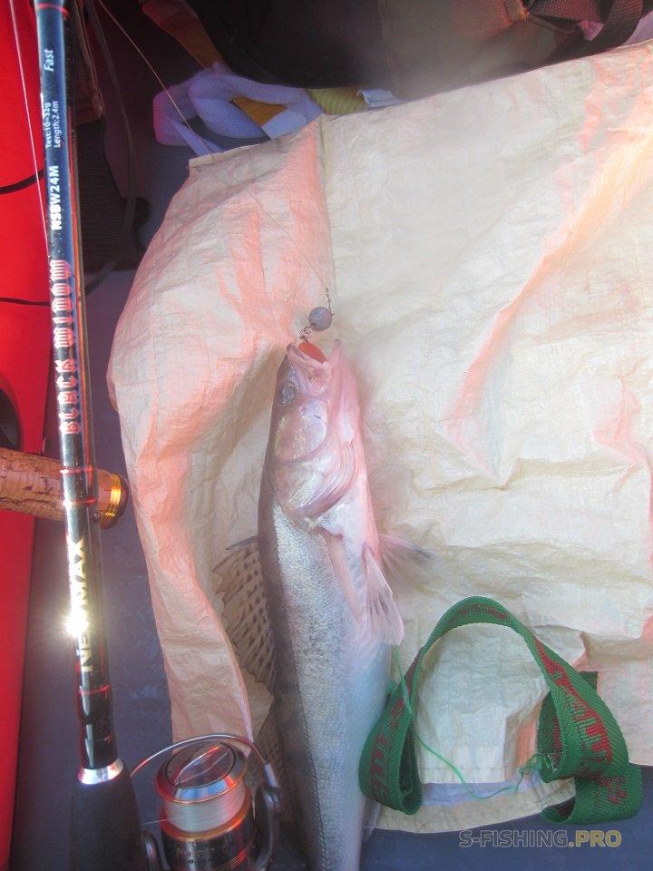 Отчеты с водоемов: Отчёт о рыбалке 23.10.2017 - Канонерка – судак - джиг