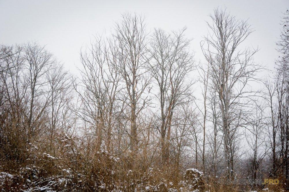 Отчеты с водоемов: Зима настала.