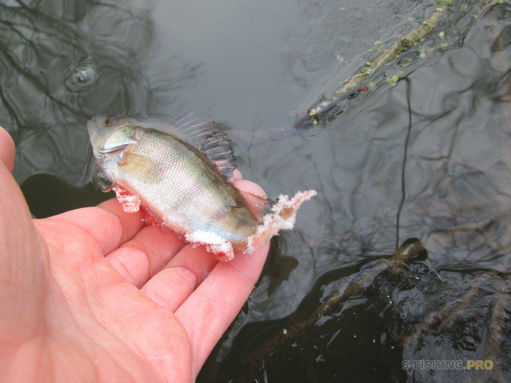 рыбалка на голавля на малых реках