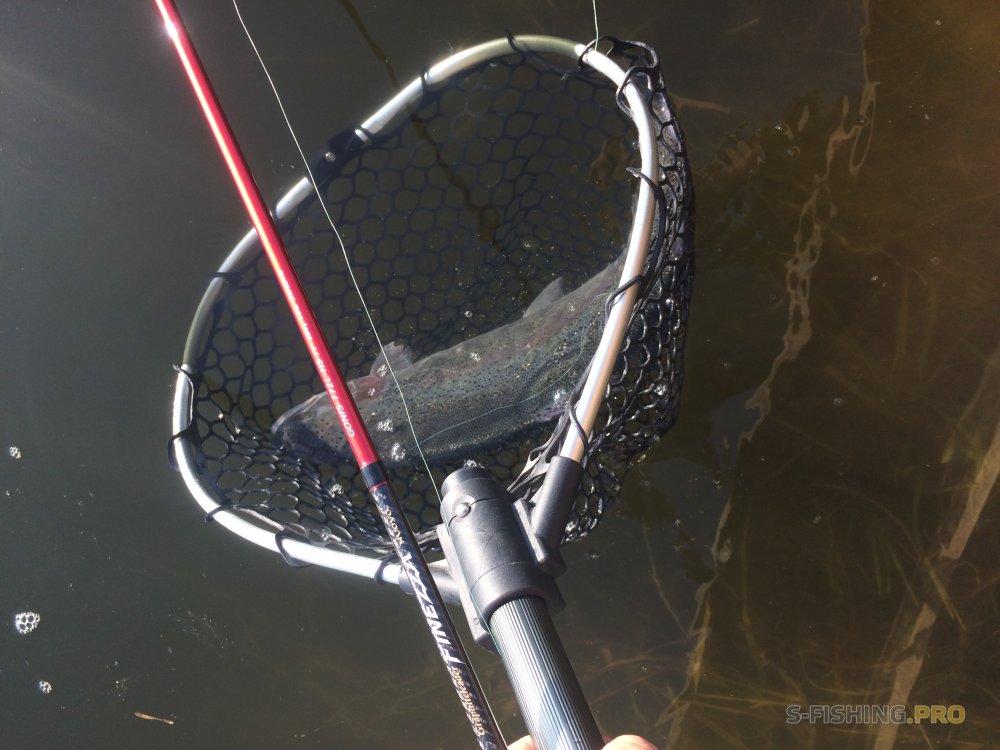 Рыбные пруды. Отчёт о рыбалке и рассказ о водоёме