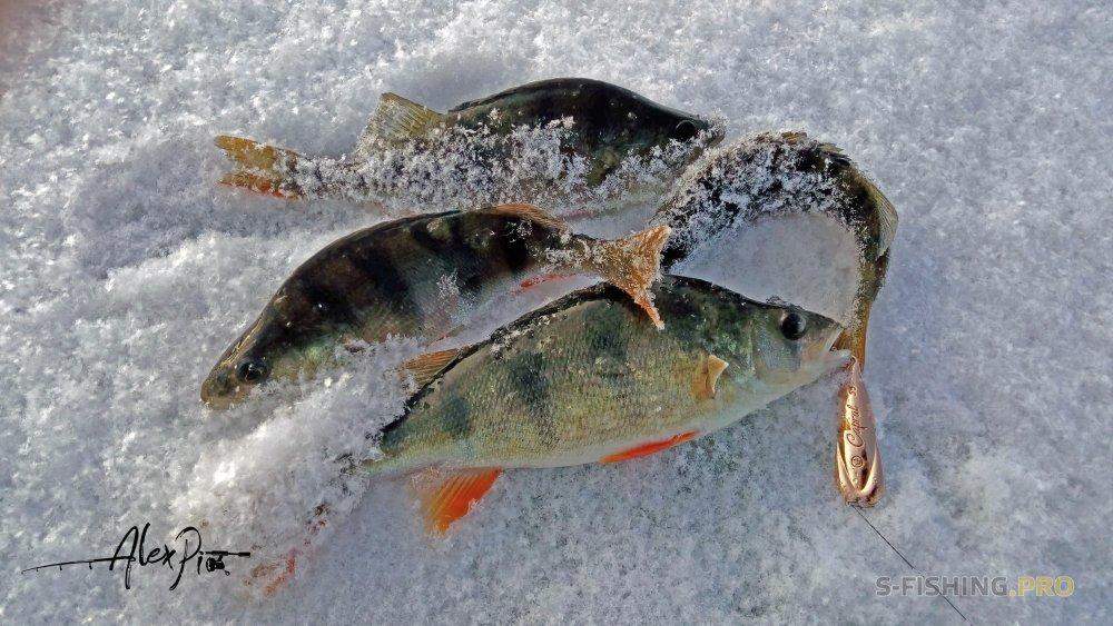 Отчеты с водоемов: Первый лед с новинкой EcoPro Capral.