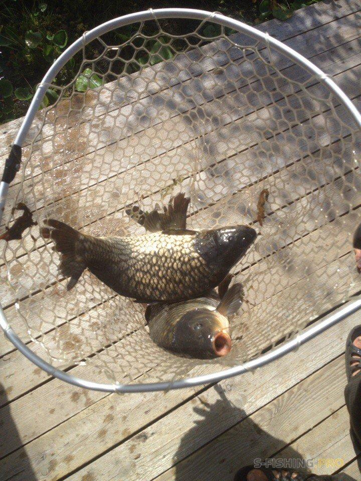 ПРО.GREENVALD Отчет. Секреты водоема или рыбалка с профи