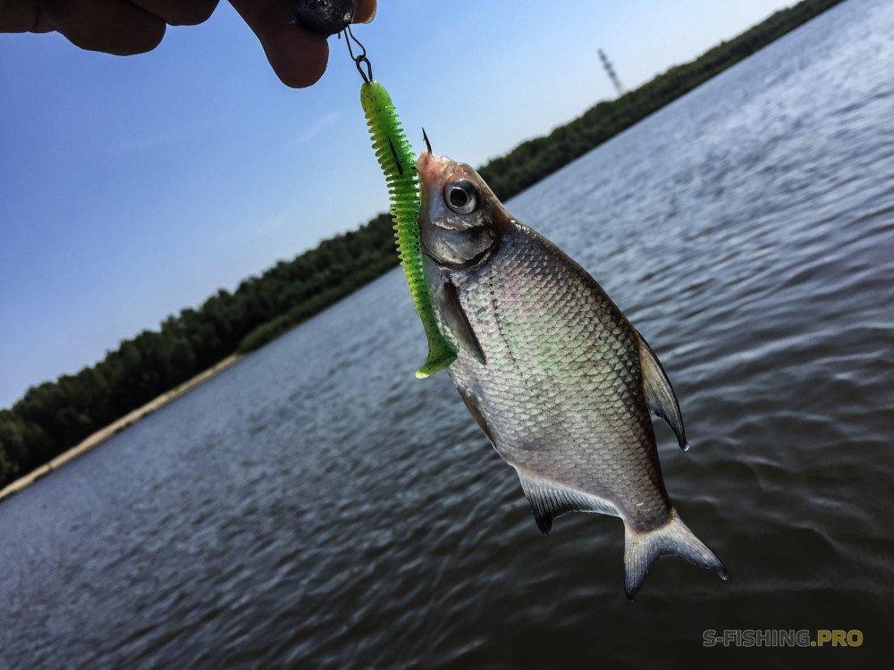 Лес и Рыба