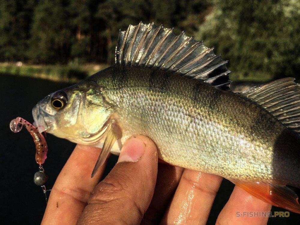 Учусь ловить местную рыбу опять