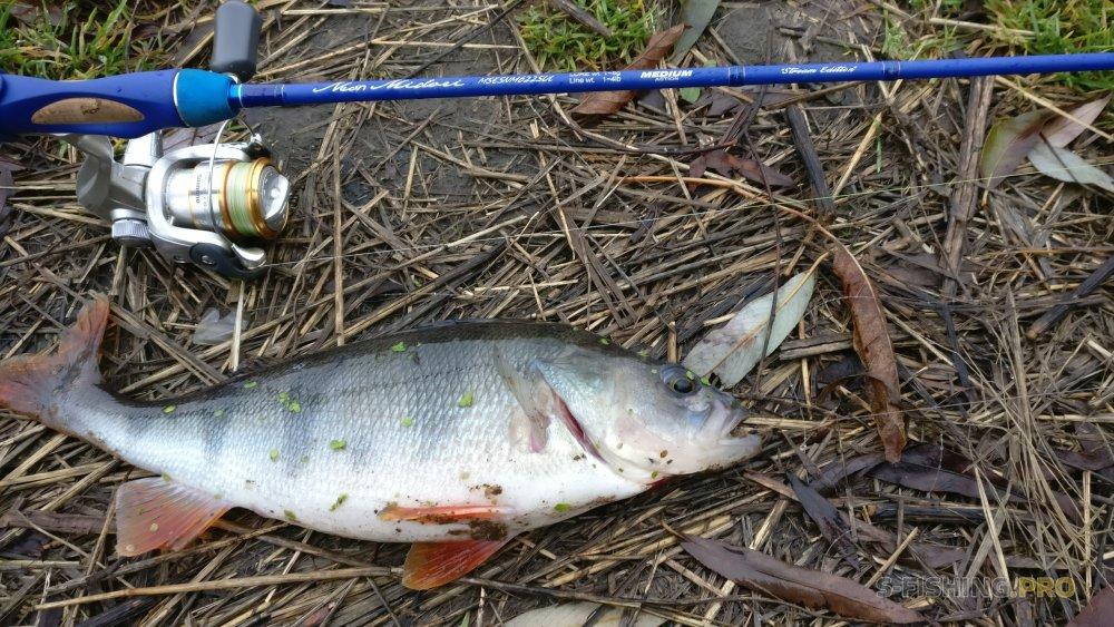 Блог им. IvanMur: Удачная ноябрьская рыбалка