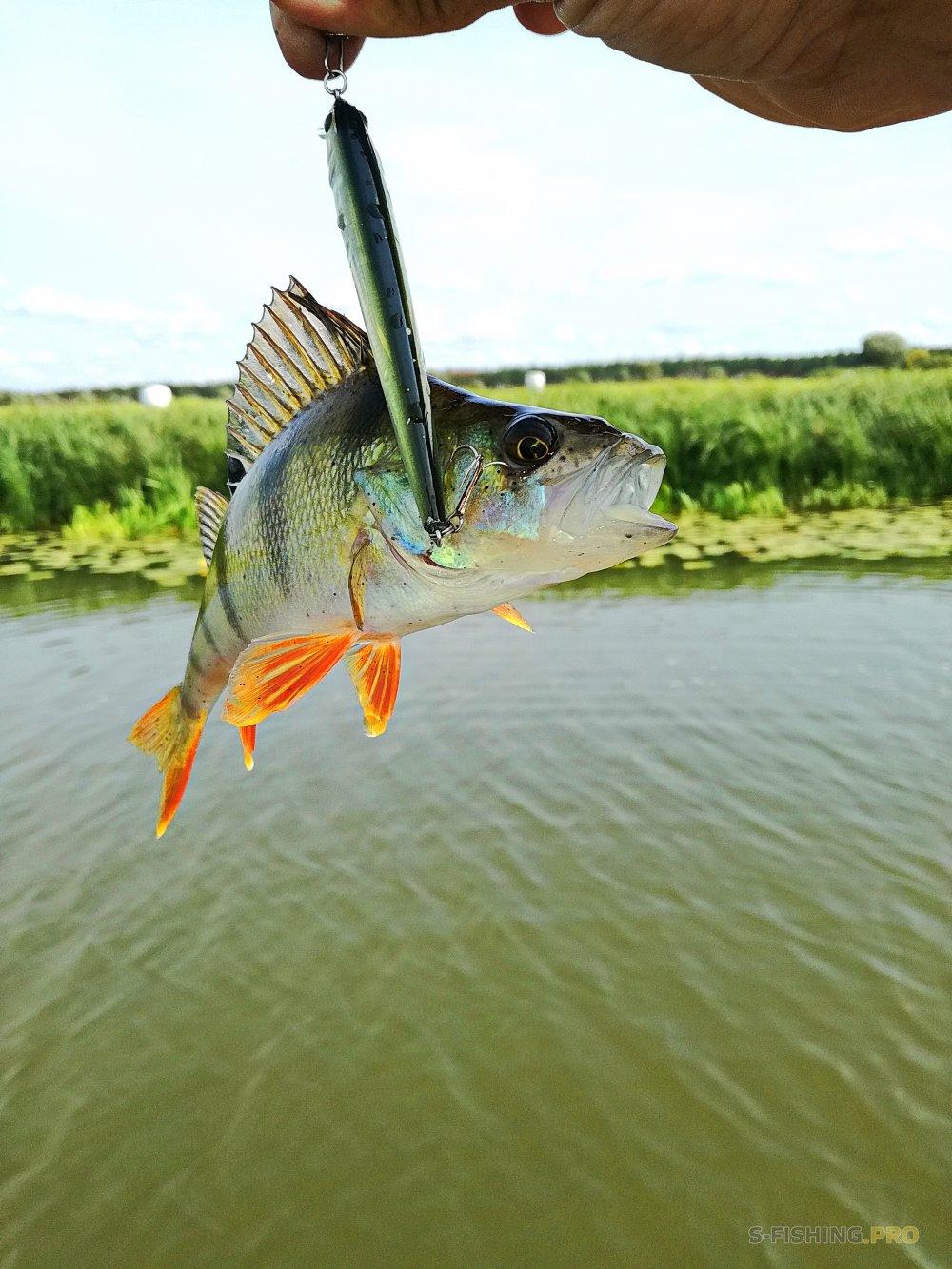 отчёт с крайних двух рыбалок