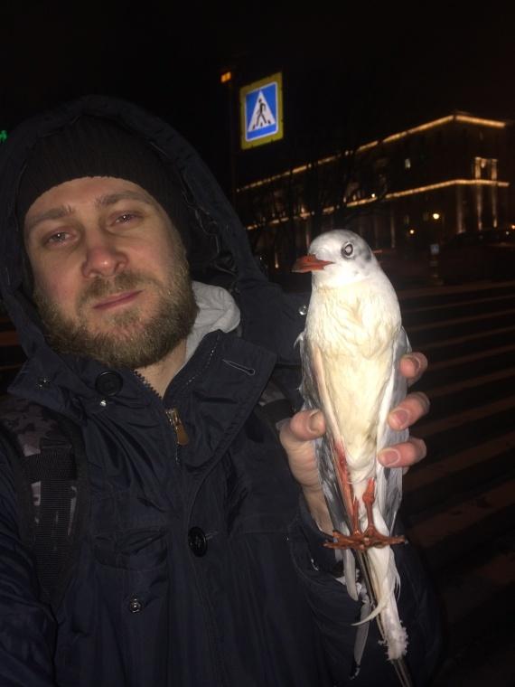Street Fishing Online: Спиннинговая охота на водоплавающую птицу