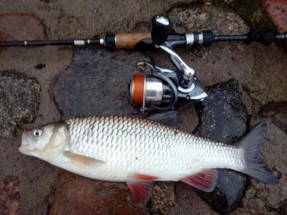 Отчеты с водоемов: Рыбалка на Неве в декабре