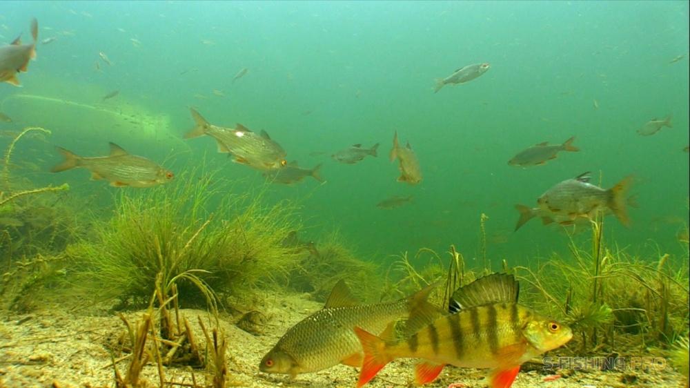 рыбалка подводой