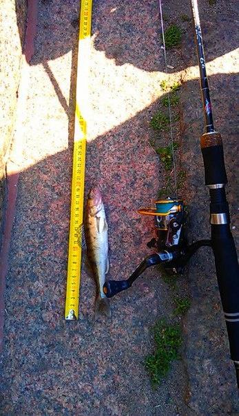 Street Fishing Online: SFO 21.06.2015