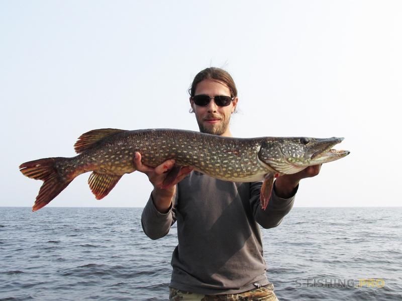 рыбинка беседка отчеты о рыбалке