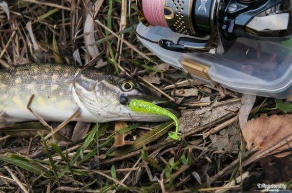 ТМ Crazy Fish: Блог им. Angelovich: Не очень успешная рыбалка