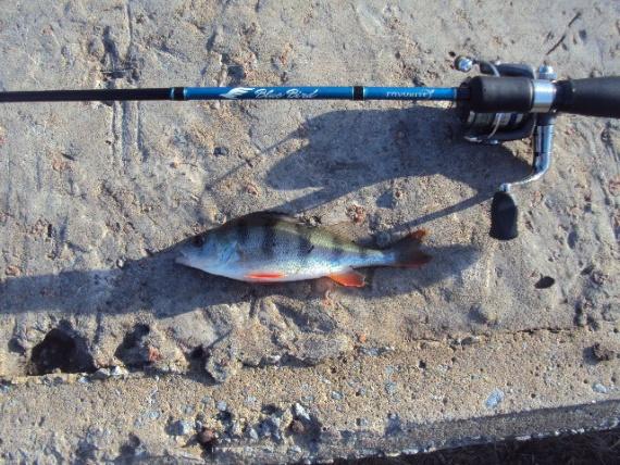 Отчеты с водоемов: Блог им. AndreyVeligorskiy: Очередная зимняя рыбалка.