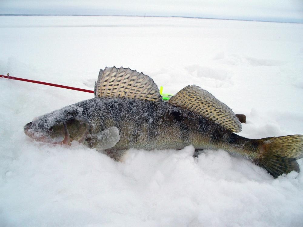 Клев рыбы на куйбышевском водохранилище