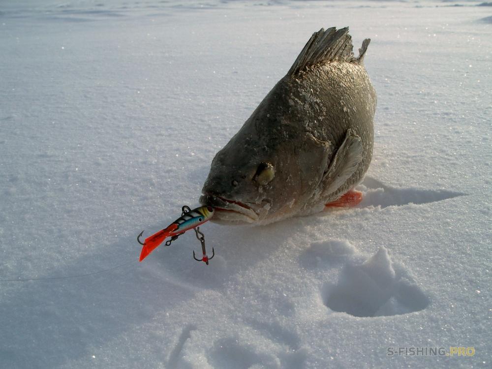 ловля окуня в феврале