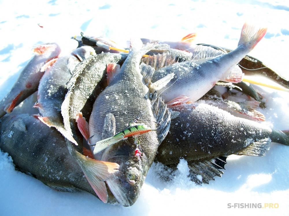 какой рыболовный ветер