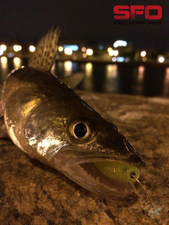 ловля салаки ночью