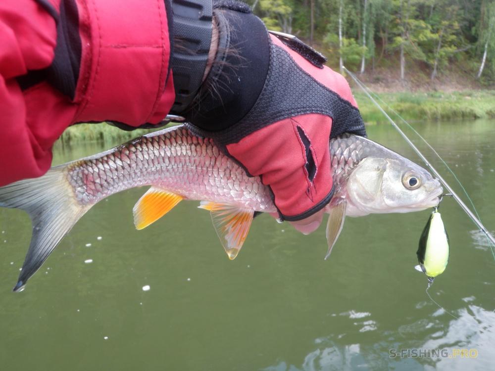 рыбалка еао хариус