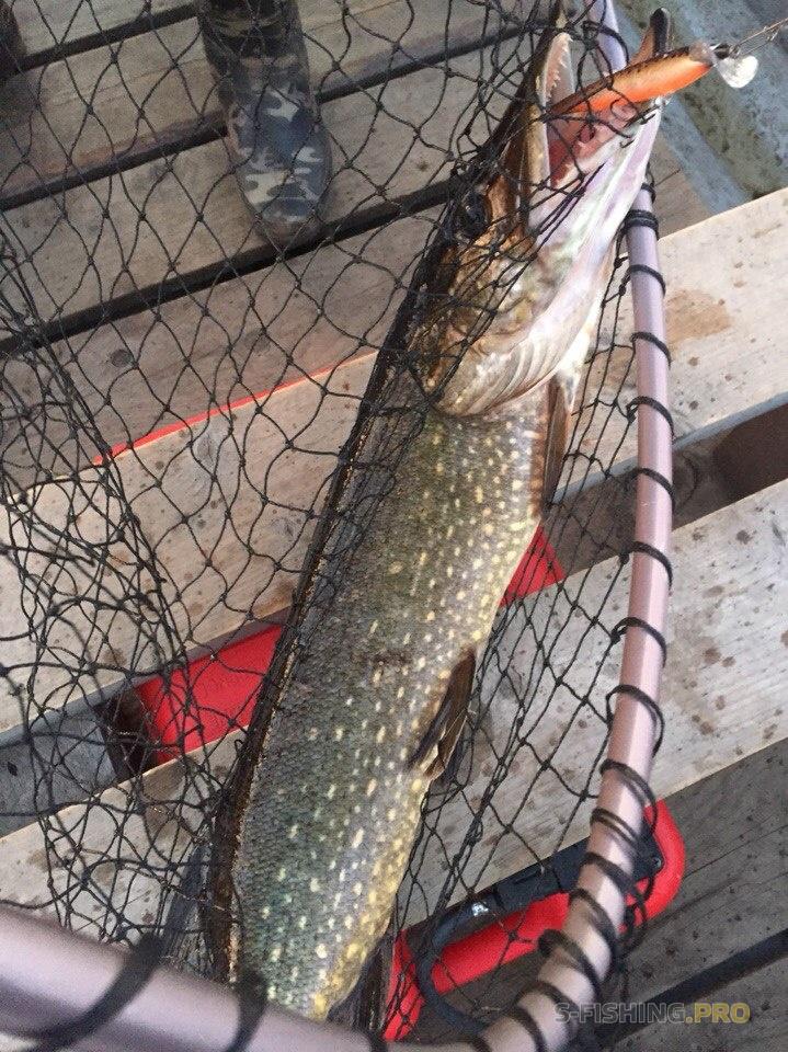 форум рыбаков на онежском озере