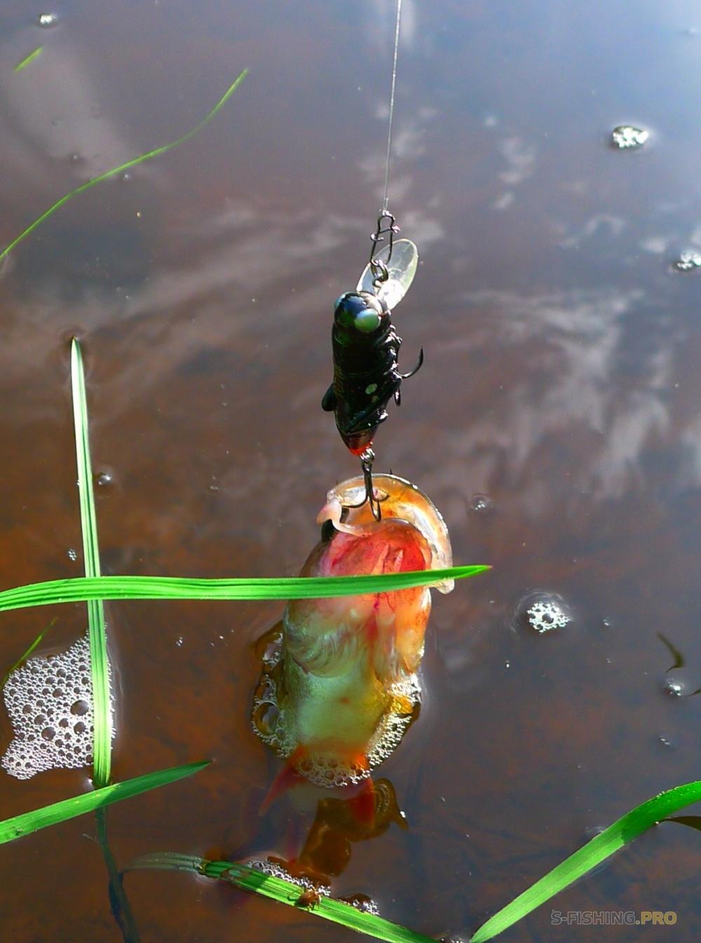 как сделать кузнечика на рыбалку