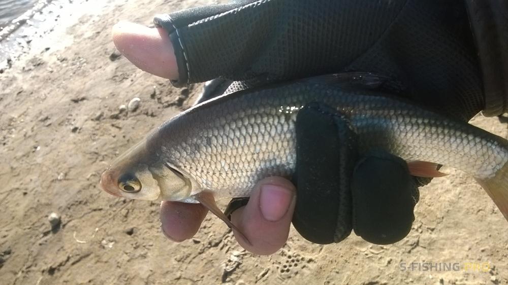 отчеты с рыбалок пермский край в контакте