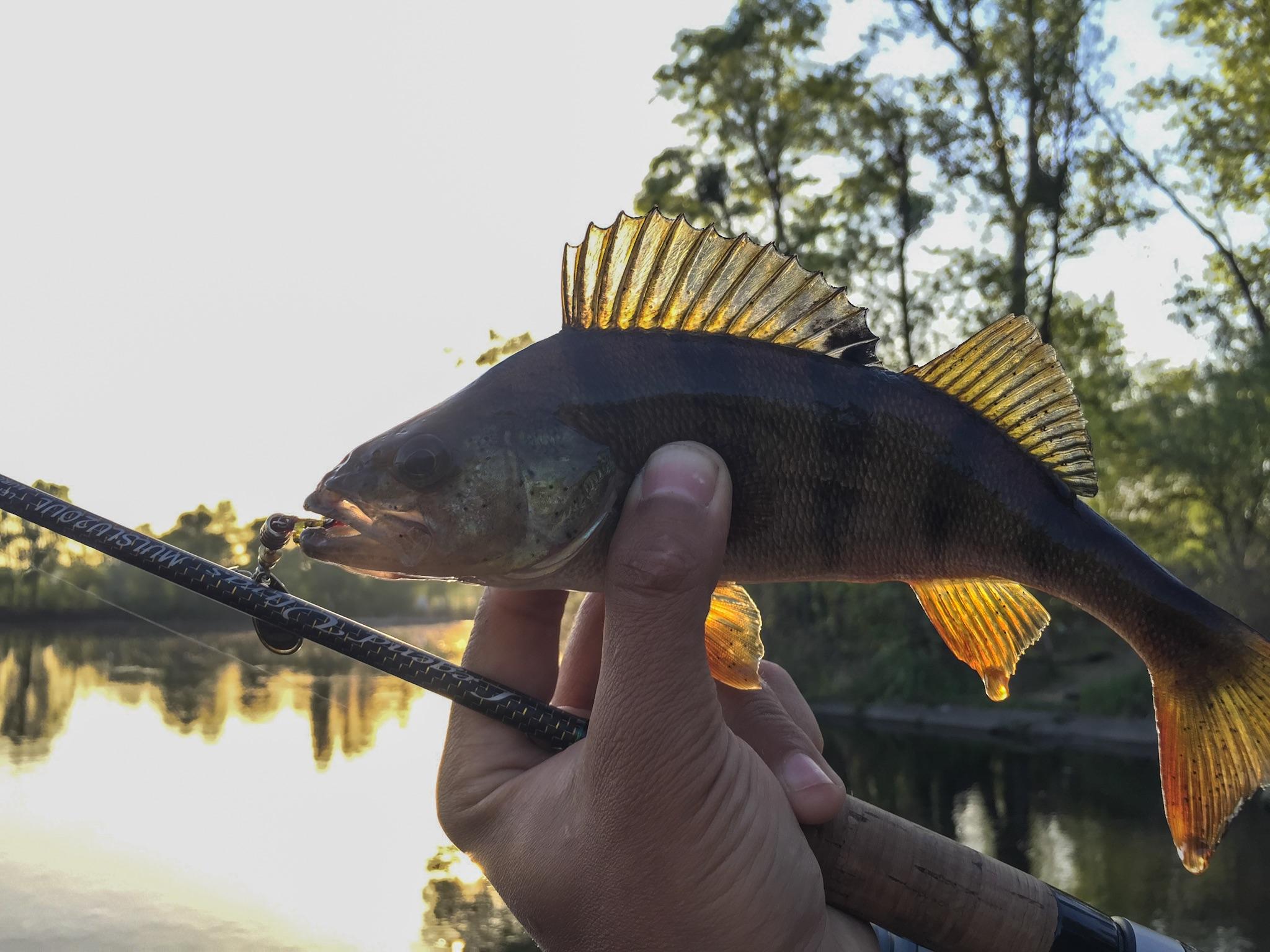 ловить рыбу на днепре