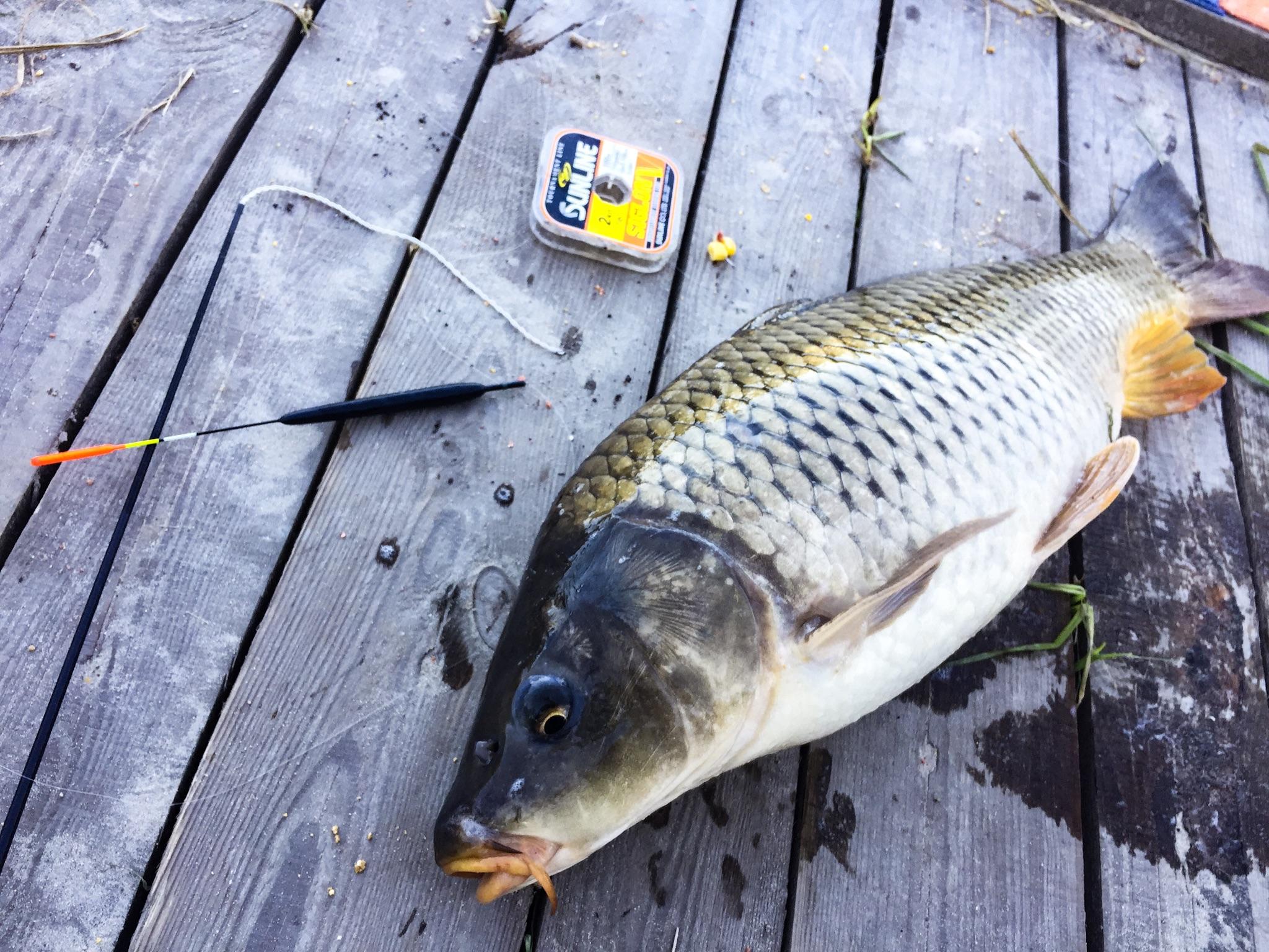 рыболовные снасти белый камень