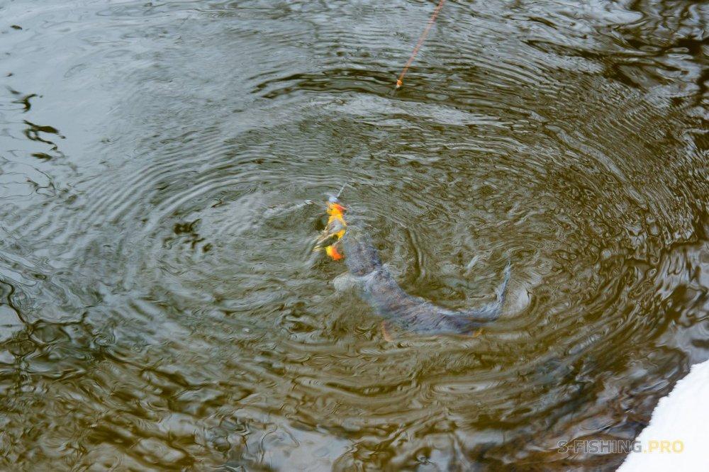 Отчеты с водоемов: Первая рыбалка года.