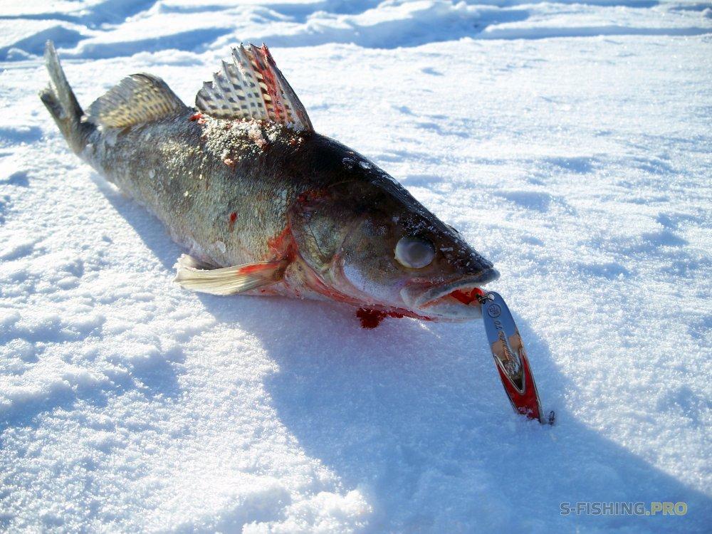 Отчеты с водоемов: ECO номное PRO должение зимней рыбалки с блесной ECOPRO судачья.