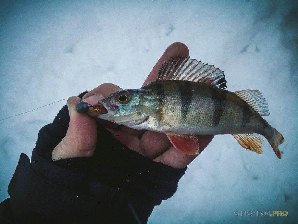 Отчеты с водоемов: Рыбалка в городской черте